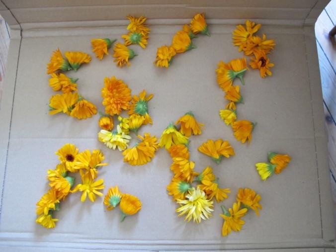 Calendula flowerheads on cardboard.